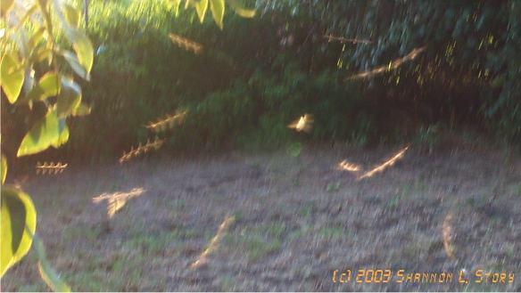 Los rods....Criaturas de otra dimension InsectRod2